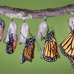 Os 3 Passos Fundamentais para Transformar uma Ideia em um Negócio de Sucesso